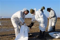 تلفات مشکوک پرندگان مهاجر زیر ذرهبین محیط زیست کشور